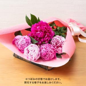 母の日 花束「芍薬(5本)」  日比谷花壇
