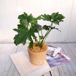 日比谷花壇 観葉植物  おしゃれ インテリア ギフト プレゼント 「セローム・バスケット」|hibiyakadan