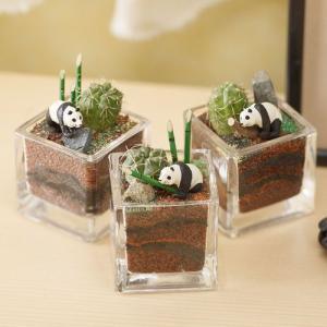 日比谷花壇 ちいさな植物と一緒に楽しむジオラマ「竹林のパンダたち」ミニサイズ3個セット ネット限定 おしゃれ インテリア|hibiyakadan