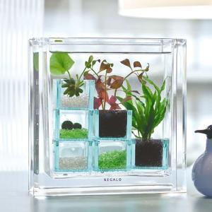 日比谷花壇 アクアプランツ「キューブ」|hibiyakadan