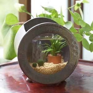 日比谷花壇 アクアプランツ「信楽焼き水槽・丸」|hibiyakadan
