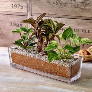 日比谷花壇 観葉植物  おしゃれ インテリア ギフト プレゼント 環境にやさしいエコスギ 「ポトス・コルジリネ・ペペロミア寄せ植え」|hibiyakadan
