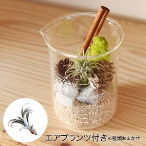 日比谷花壇 観葉植物  URBAN GREEN MAKERS テラリウムキット「ビーカー」|hibiyakadan