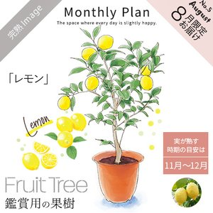 フルーツツリー 8月「レモン」  誕生日 花 日比谷花壇の画像