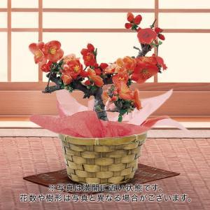 日比谷花壇 観葉植物  おしゃれ インテリア ギフト プレゼント 「ウンベラータ(L)・バスケット」|hibiyakadan