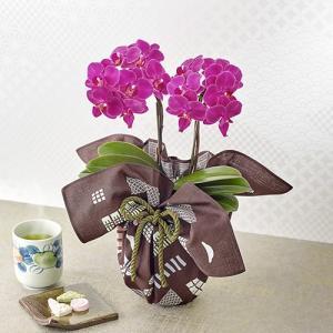 ミディ胡蝶蘭風呂敷包み「キラキラ」 日比谷花壇
