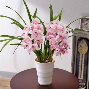 日比谷花壇 季節の 蘭鉢 「小型シンビジウム(ピンク系)アーチ2本立ち」 hibiyakadan