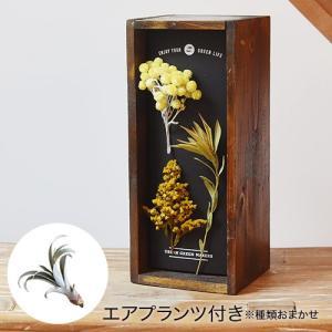 日比谷花壇 観葉植物  URBAN GREEN MAKERS ハーバリウム ウッドボックス「サニーデイズ」インテリアキット|hibiyakadan
