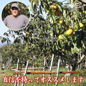 岐阜県産 贈答用「吉田さんの富有柿2段箱2Lサイズ 24個」(送料無料) hida-mino-furusato 02