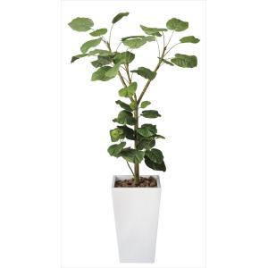 光触媒観葉植物 アートウンベラータ1.8m|hikarinorakuen