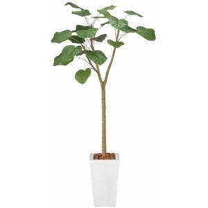 人工観葉植物 ウンベラータ 1.7m|hikarinorakuen