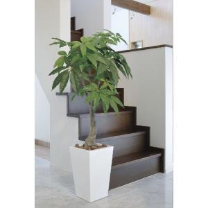 光触媒 観葉植物 ロイヤルパキラ  1.35m|hikarinorakuen