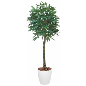 光触媒観葉植物 パキラ 1.6m|hikarinorakuen