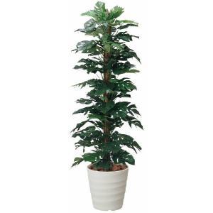 光触媒観葉植物 スプリットフィロ 1.8m|hikarinorakuen