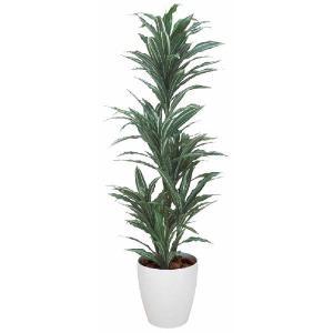 光触媒観葉植物 ワーネッキー 1.8m|hikarinorakuen
