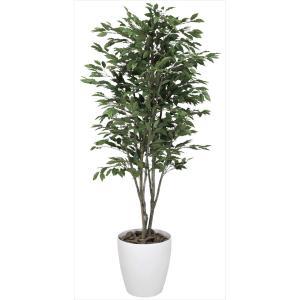 光触媒観葉植物 ベンジャミンツリー 1.6m|hikarinorakuen