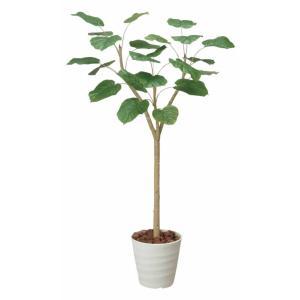 大型 人工観葉植物ウンベラータ 1.8m|hikarinorakuen