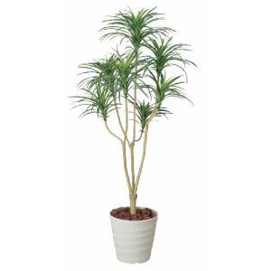 光触媒観葉植物 ユッカ 1.6m|hikarinorakuen