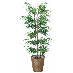 光触媒観葉植物 黒竹 1.2m|hikarinorakuen
