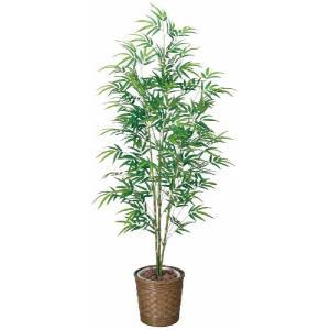 光の楽園 青竹 1.8m|hikarinorakuen
