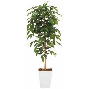 人工観葉植物 アルデシア 1.2m|hikarinorakuen
