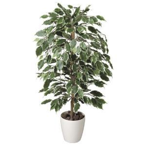 光触媒観葉植物 ゴールデンフィカス 1.0m|hikarinorakuen
