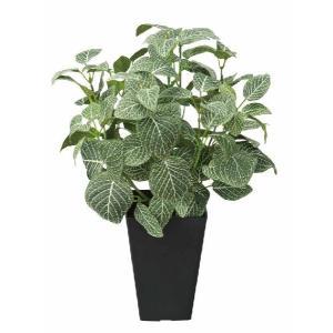 人工観葉植物 フィットニアS|hikarinorakuen