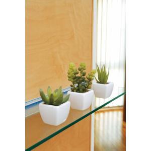 光触媒インテリアグリーン 多肉植物3点セット hikarinorakuen