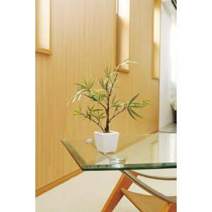 光の楽園 黒竹|hikarinorakuen