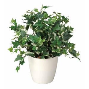 光触媒観葉植物 ホーランドアイビー|hikarinorakuen