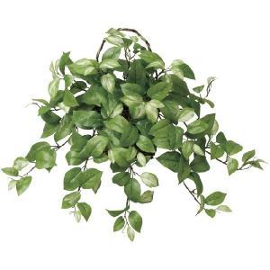 光触媒観葉植物 壁掛ホヤ|hikarinorakuen