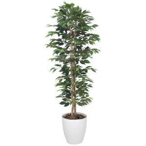 光触媒人工観葉植物 ベンジャミンスリム 1.6m|hikarinorakuen