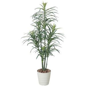 光触媒観葉植物 ドラセナコンシンネ 1.3m|hikarinorakuen