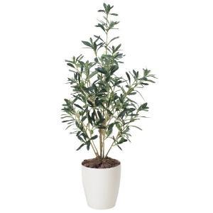 光触媒観葉植物 オリーブ90|hikarinorakuen
