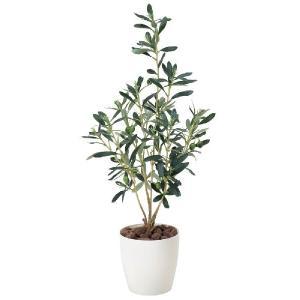 光触媒観葉植物 オリーブ|hikarinorakuen