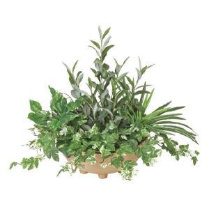 光触媒観葉植物 寄せ植えオリーブ|hikarinorakuen