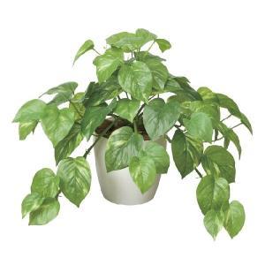 光触媒 観葉植物 フレッシュポトス|hikarinorakuen