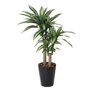 光触媒観葉植物 幸福の木1.1m|hikarinorakuen
