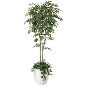 光触媒観葉植物 マウンッテンアッシュ1.8植栽付m|hikarinorakuen