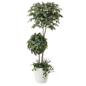 光触媒観葉植物 ベンジャミンダブルフェイス植栽付1.8m|hikarinorakuen