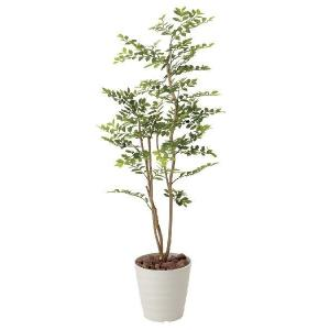 光触媒観葉植物 ゴールデンリーフ 1.25m|hikarinorakuen