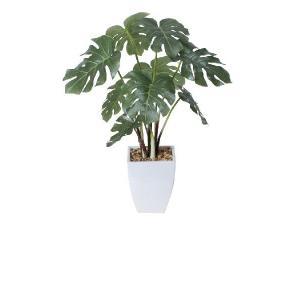 光触媒観葉植物 モンステラポット|hikarinorakuen