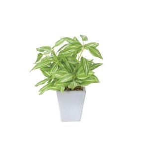 光触媒観葉植物 トラディスカンティアポット|hikarinorakuen
