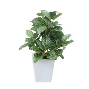 光触媒人工観葉植物 フィットニアポット|hikarinorakuen