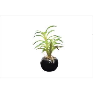 光触媒観葉植物 カクタスインポット|hikarinorakuen