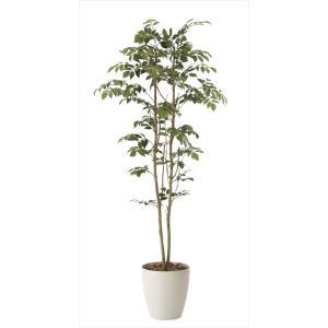 人工観葉植物 マウンテンアッシュ1.6m|hikarinorakuen