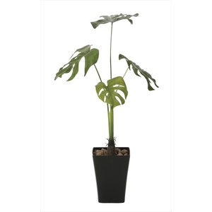 光触媒人工観葉植物 モンステラ90 hikarinorakuen