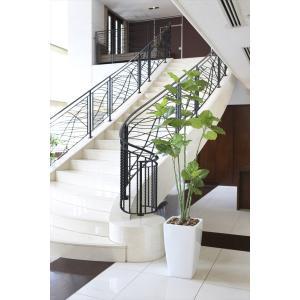 光触媒観葉植物 アーバンブランチウンベラータ1.9m|hikarinorakuen