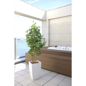 人工観葉植物 アーバンシーグレープ1.8m|hikarinorakuen