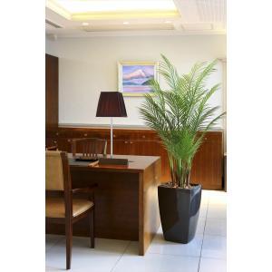 光触媒人工観葉植物 アーバンアレカパーム1.7m|hikarinorakuen